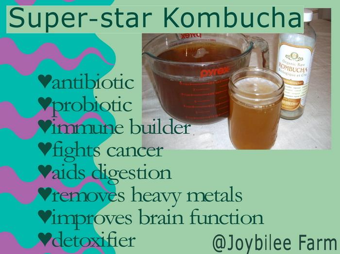 Kombucha Side Effects Mayo Clinic